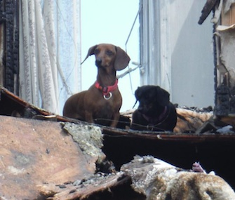 Firefighters in Pennsylvania found two dogs standing on the second floor of their home a day after it burned.