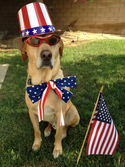 Porter the Labrador/Rhodesian Ridgeback mix shows off his patriotism