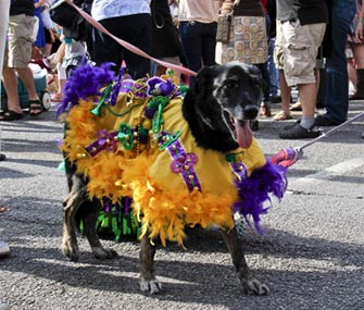 One of the participants marches in the Krewe of Barkus parade on Sunday.