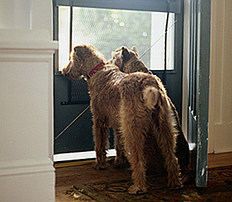 Dogs at the Door & Why Does My Dog u2026 Pee When Someone Is at the Door? pezcame.com