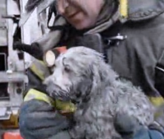 A firefighter saved a 3-month-old Maltese puppy from a devastating fire in Brooklyn Tuesday.