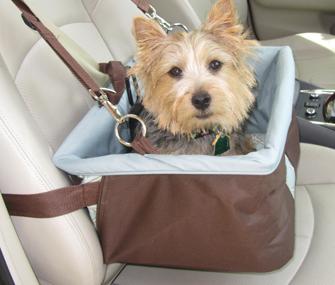Dog in a car seat