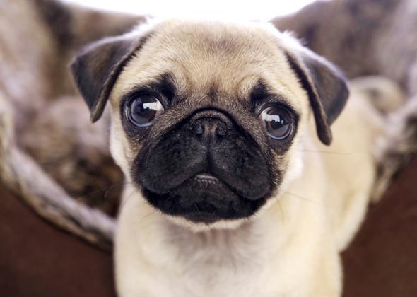 7 Lap Dog Breeds We Love