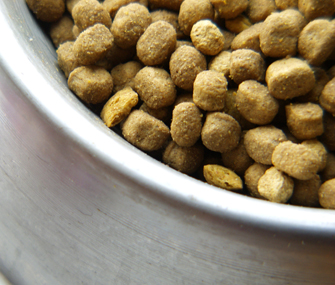 Up close shot of dog food bowl