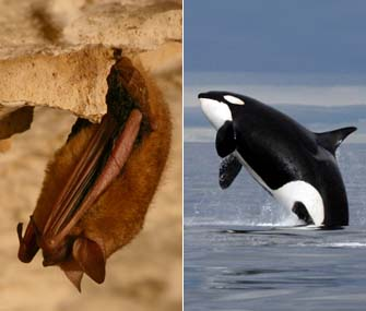 Whale and Bat