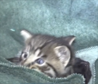 Los Angeles firefighters rescued three kittens from a drainpipe and reunited them with their siblings and mom.