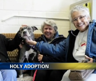 A group of nuns adopted Remy, a 9-year-old Pit Bull, in New York.