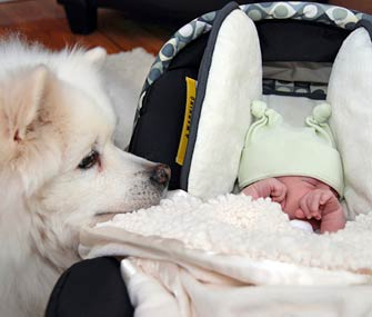 Dog and new baby