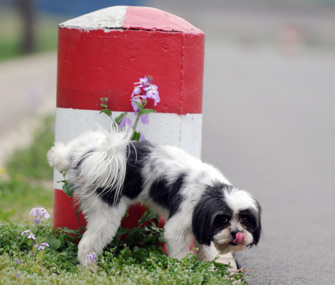 Frequent urination could be a sign of a UTI in your dog