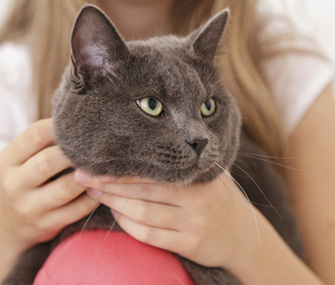 Teach Kids and Cats to Interact Safely