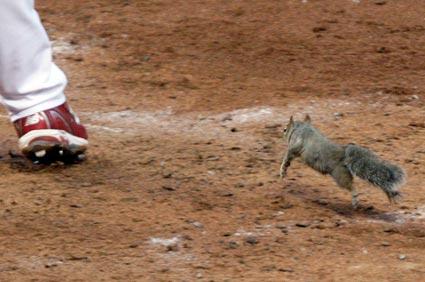 Squirrel interrupts baseball playoff game