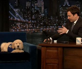 Jimmy Fallon puppy predictor Bruce Mackabee