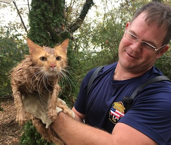 Thomas Jefferson the cat was rescued from a storm drain in Nashville.