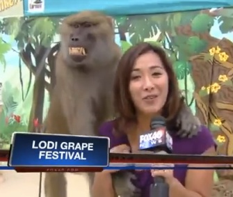 Mickey the baboon got hands-on with a reporter during a live shot.