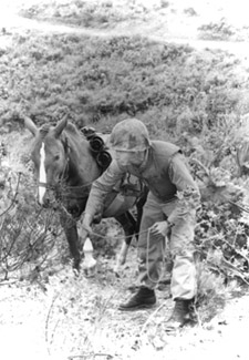 Sgt. Reckless the Marine horse