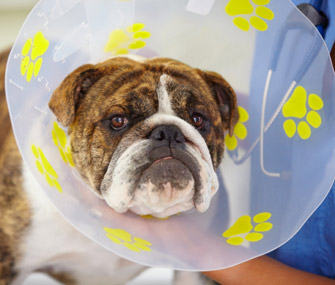 Pet Injury Protection Alternatives To The Cone For Dogs