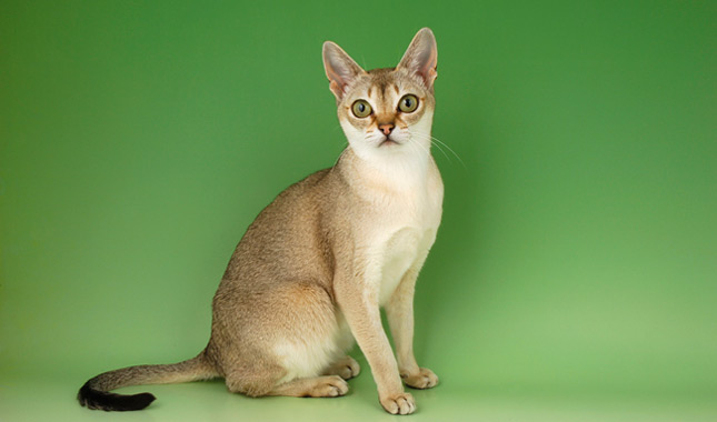 how to find out cat breed