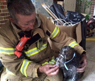 A firefighter in Australia helps Angus the dog with an oxygen mask.