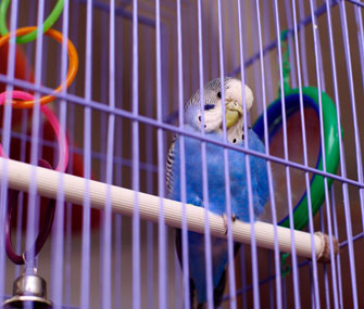 How Can We Keep Our Bird Safe From Our Cat?
