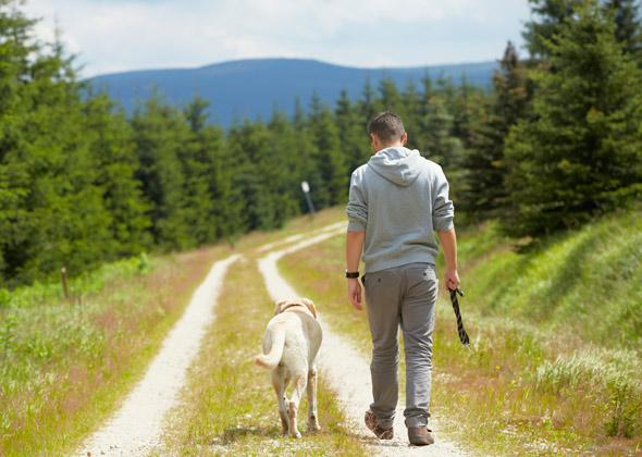 Resultado de imagem para walk with dog