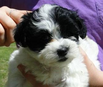 Mia Farrow's puppy Dexter