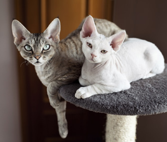 Two Cats Sitting on Cat Tree