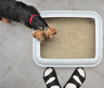 Dog and litterbox