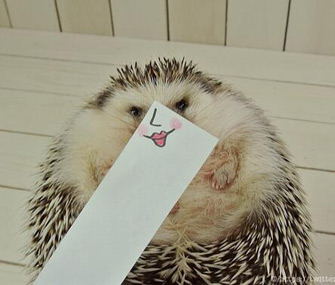 Marutaro the Hedgehog has a silly face