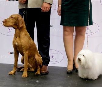 Falko, left, a wire-haired Vizsla, and Luna, a Coton de Tulear, pose on stage with their owners Tuesday.