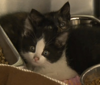 Two kittens are headed to foster care after surviving for five days in a sealed boxcar.