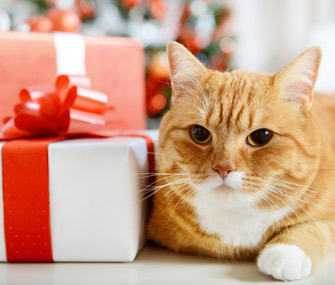 Cat with a Christmas gift