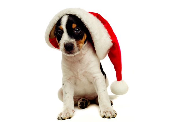 - 15 Dog Breeds Wearing Christmas Outfits