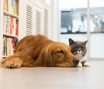 Dog and cat sitting together in house