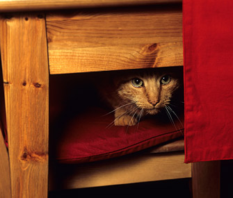 Cat hiding under table