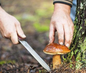 Man cutting wild mushroom