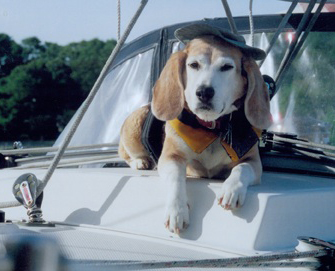 Mate the Beagle on First Mate Patty Deluca's boat