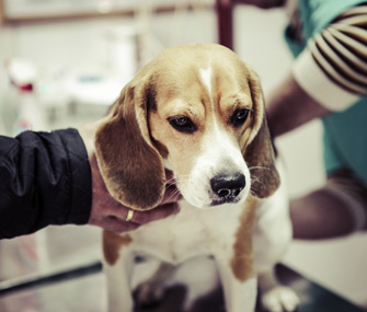 Heartworm Treatment For Dogs What You Need To Know
