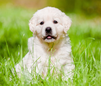 Puppy Care Basics How To Care For A New Puppy Caring For A New Puppy