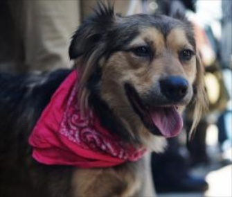 Tie was rescued from train tracks in Harlem after trying to race a commuter train.