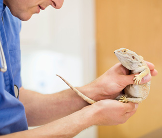 Lizard at Vet