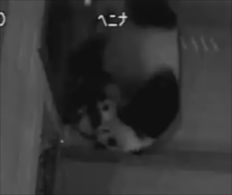 You can still get your panda fix with Zoo Atlanta's panda cam.