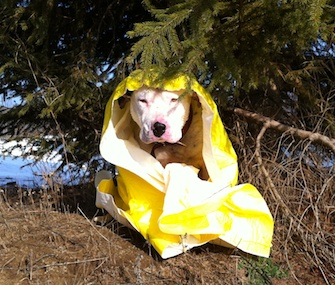 Rescue workers in Michigan saved this dog from an icy pond and warmed him with a thermal blanket.