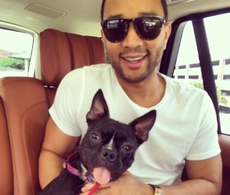 Singer John Legend and his wife, model Chrissy Teigen, adopted a three-legged puppy named Penny.