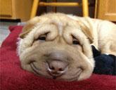 Smiling dog Moose