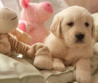 Puppy sitting on sofa with toys
