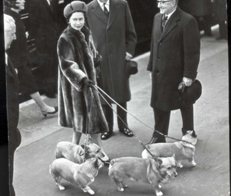 Queen Elizabeth and Corgis