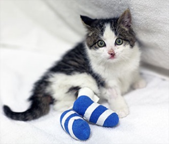 Pedro, an 8-week-old kitten, was rescued by a Good Samaritan when he was thrown from a car window on a Toronto highway.