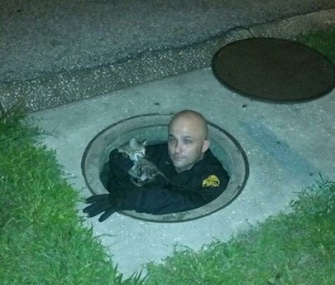 A police officer in Tampa climbed into a manhole to rescued a trapped kitten.