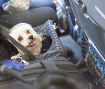 what to know before flying with your dog or cat