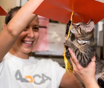 Seven-week-old Uma, who was nursed back to health at the ASPCA's Kitten Nursery, plays with the tassel on his caregiver's mortarboard.